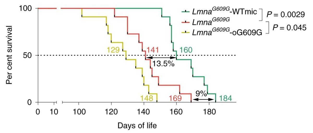 Трансплантация фекальной микробиоты продлила жизнь преждевременно стареющим мышам