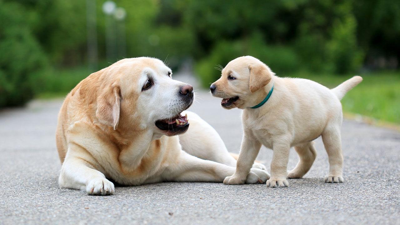 Сколько на самом деле лет вашей собаке?