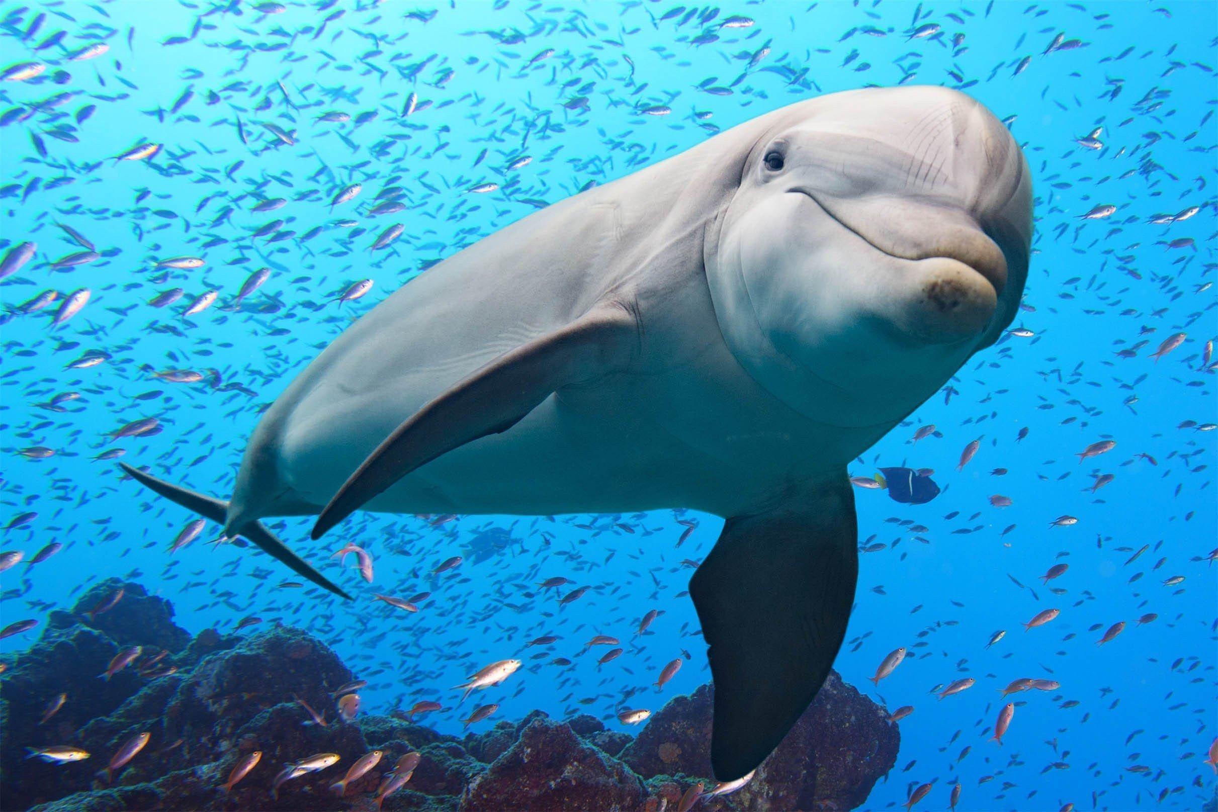 Спасибо за рыбу! Так ли дельфины дружелюбны, как привыкли считать