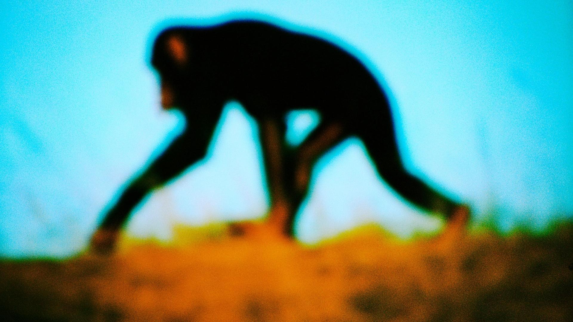 Новые мутации появляются у людей реже, чем у других гоминидов