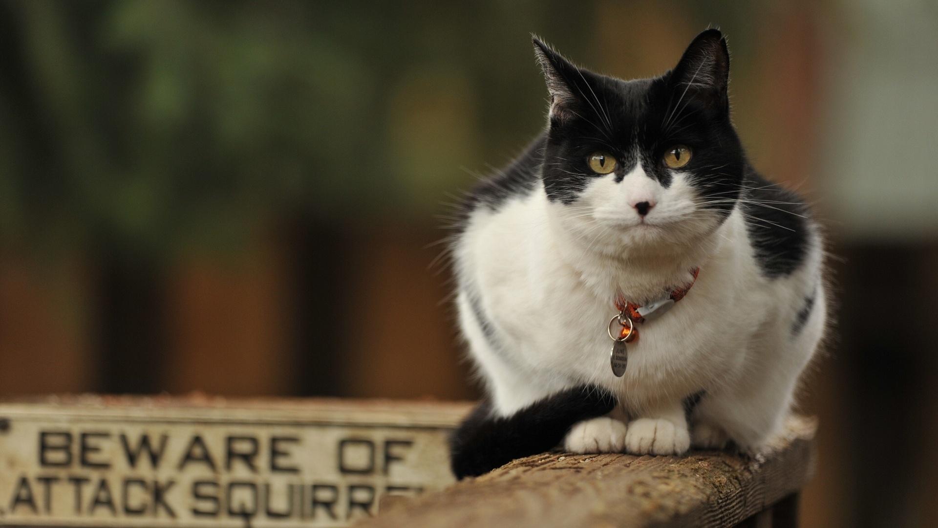 Стоит ли прикреплять к ошейнику вашей кошки колокольчик?