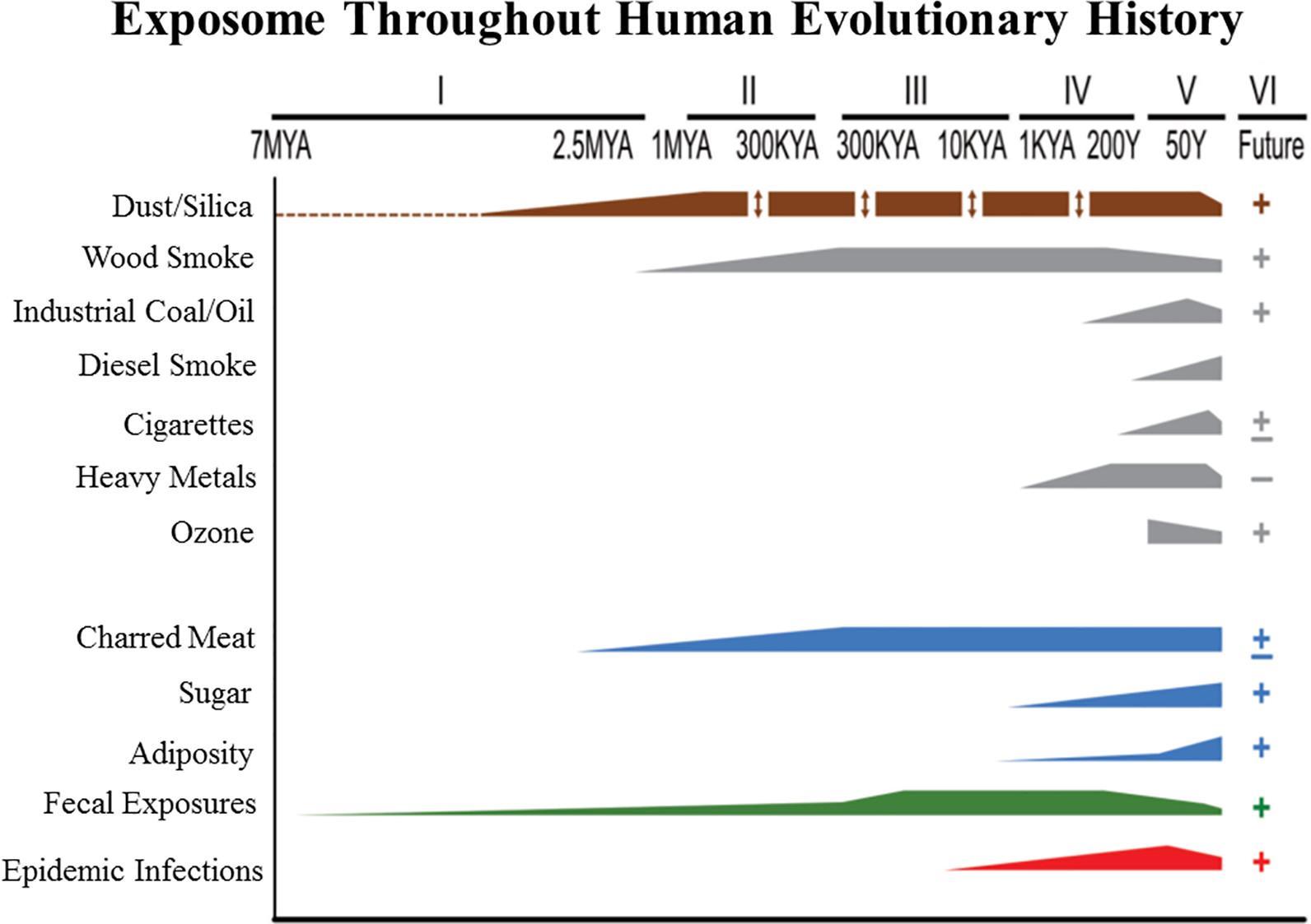 Гены устойчивости к сигаретным токсинам и канцерогенам оказались очень древними
