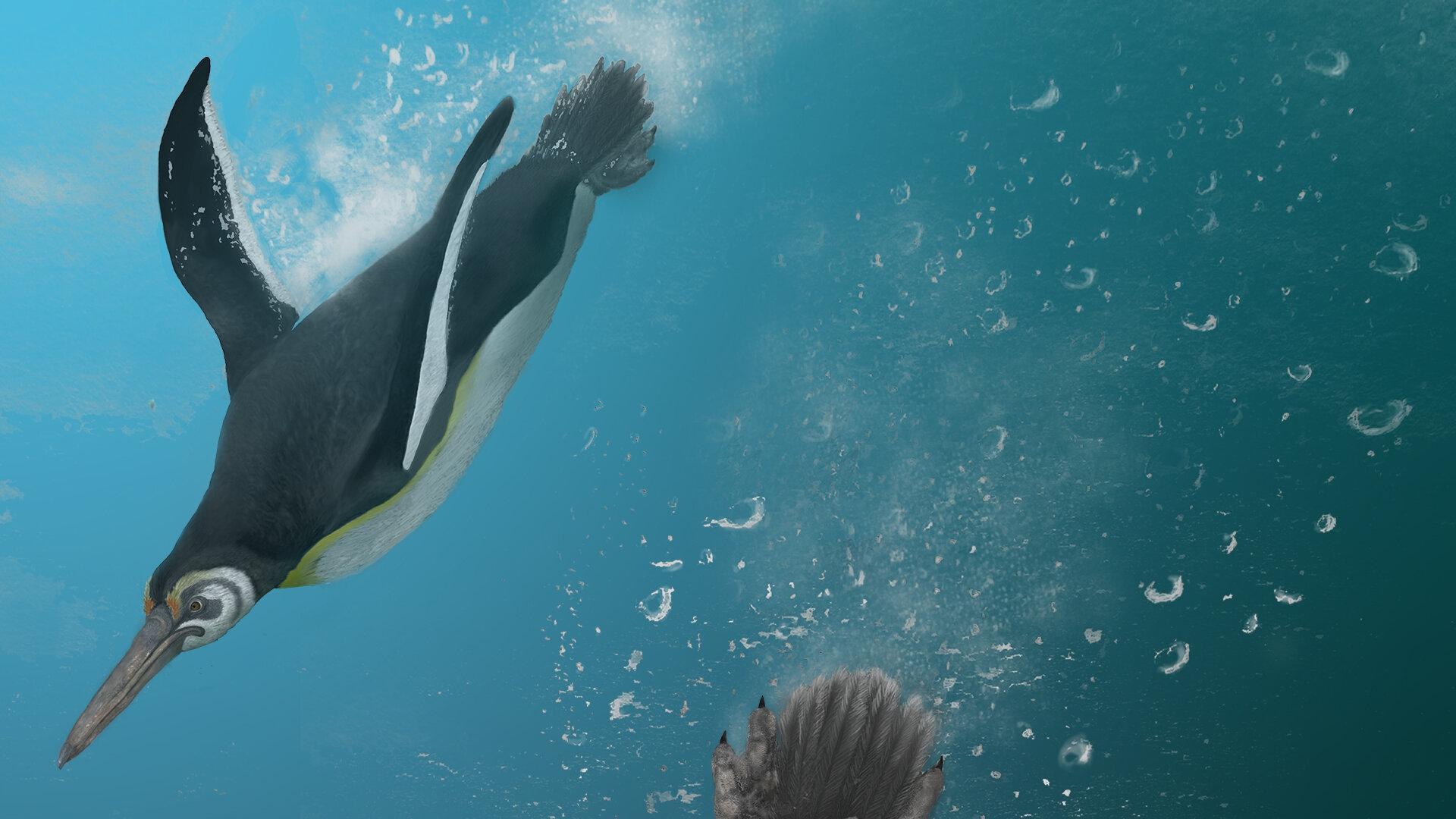 Эволюция пингвинов: «сразу вышел хорошо»