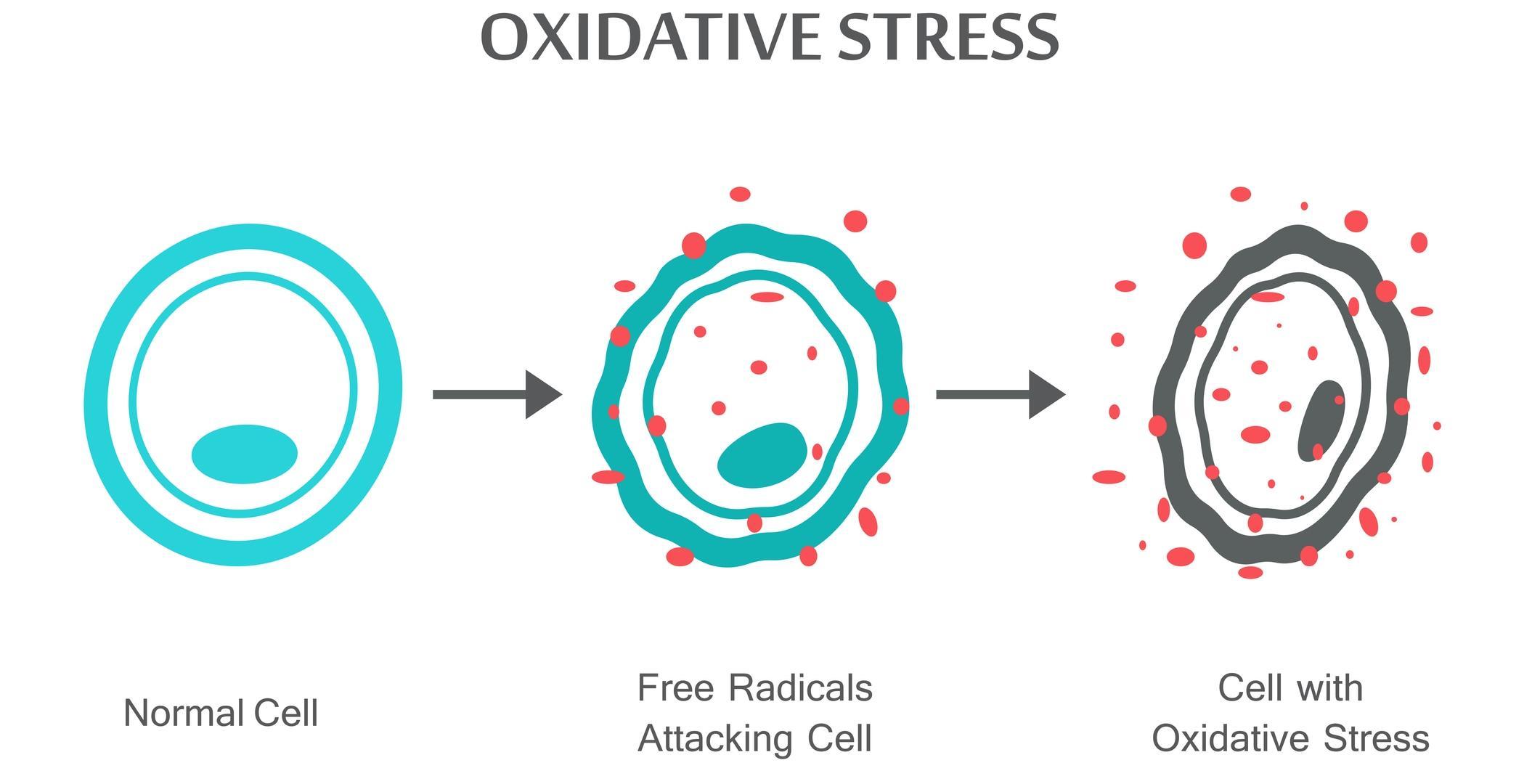 Когда стресс продлевает жизнь