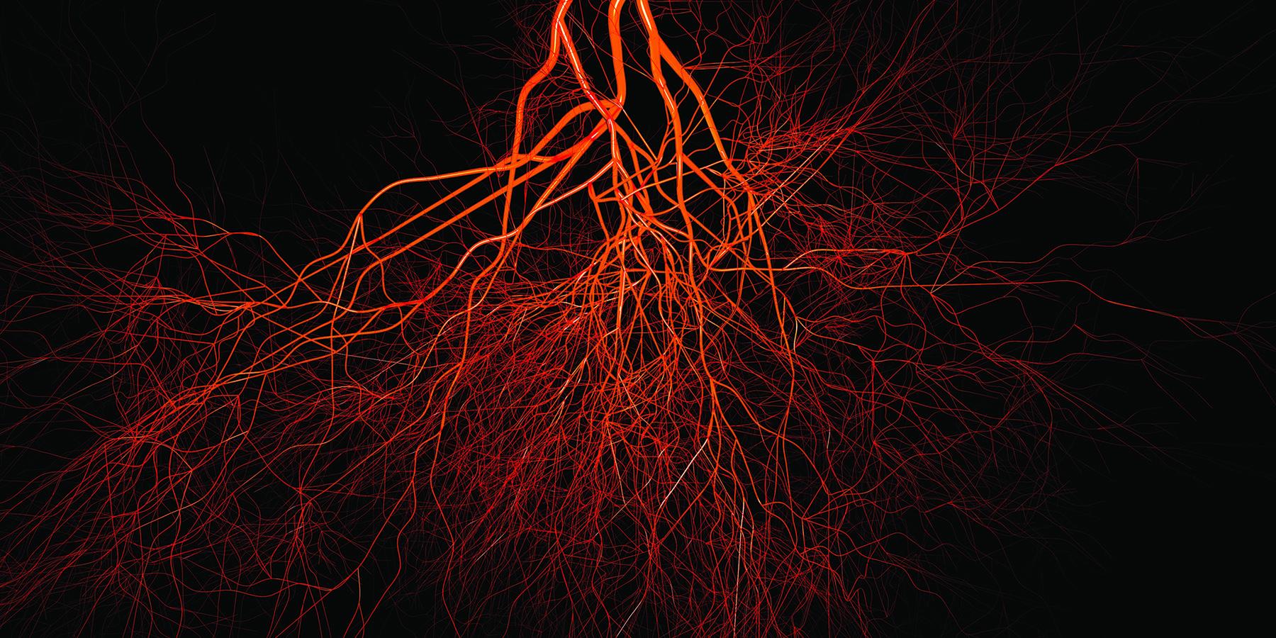 Женские кровеносные сосуды опередили мужские по скорости старения
