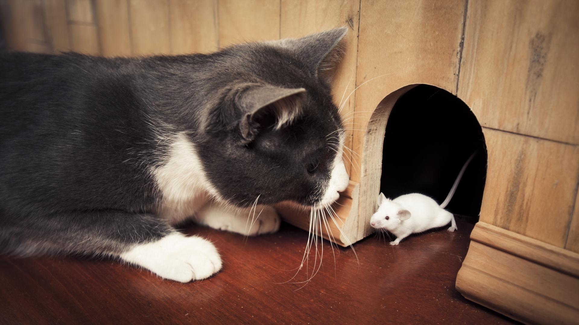 Кошачий паразит избавляет от страха