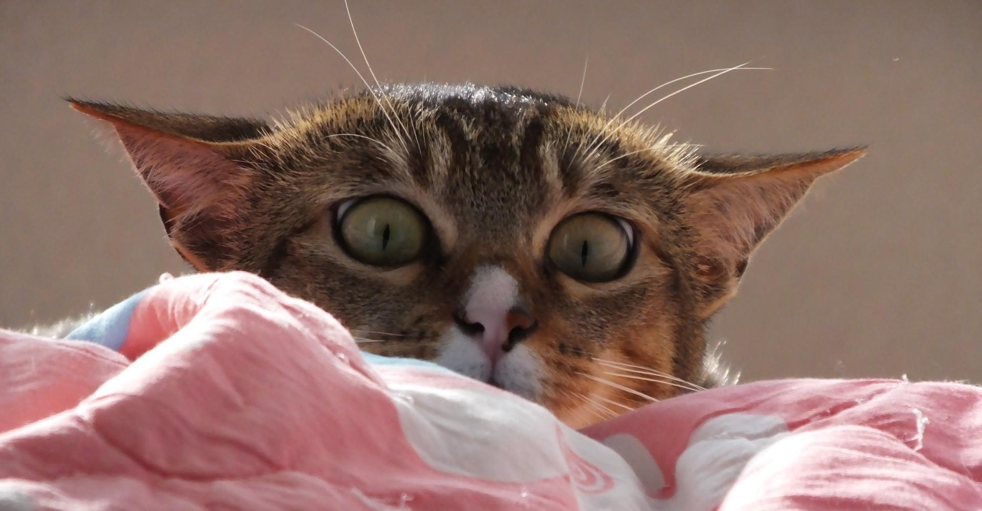 Кошки, токсоплазма и безумие