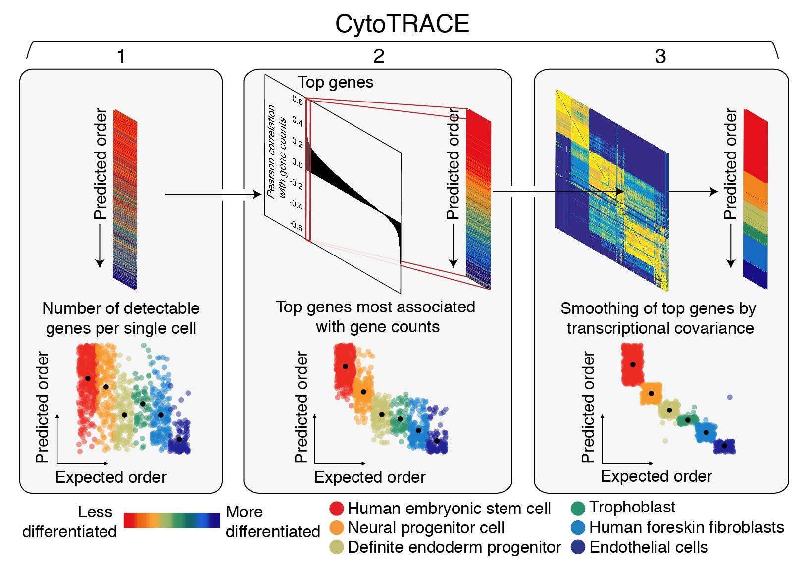 Количество генов, которые используются для синтеза РНК, помогло ученым обнаружить опасные раковые клетки