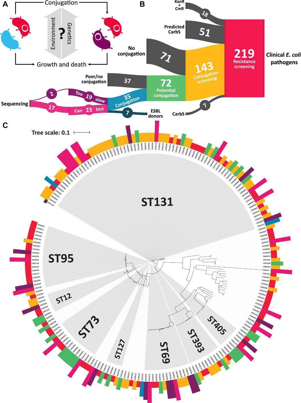 Горизонтальный перенос генов у бактерий оказался независим от антибиотиков