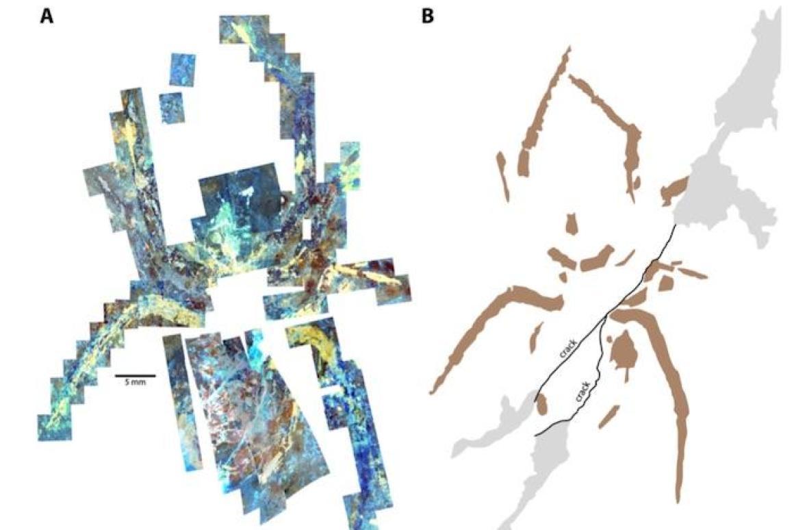 Результаты исследования образца методом флуоресцентной микроскопии