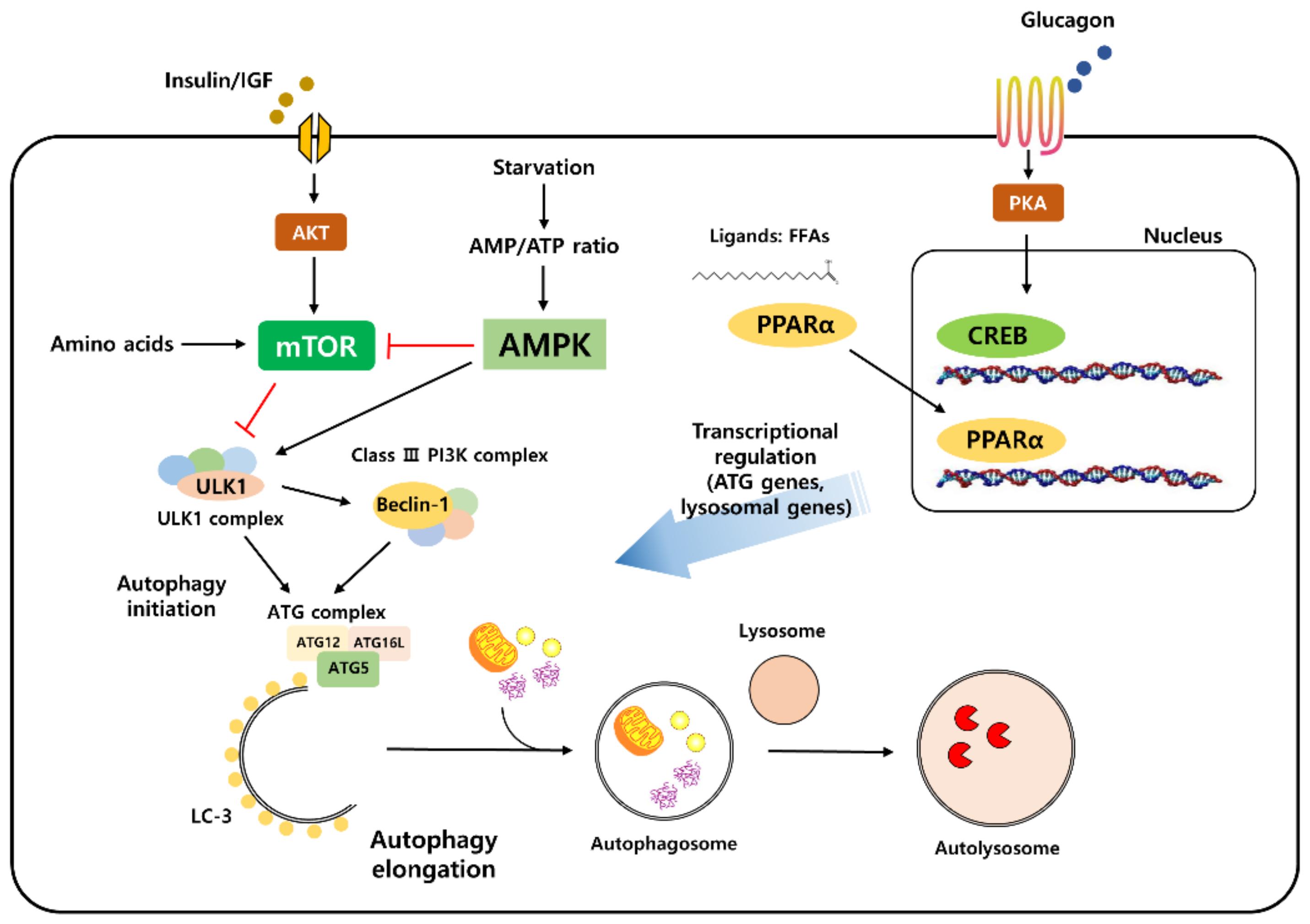 Ранее неизвестный метаболический механизм может стать ключом к лечению рака