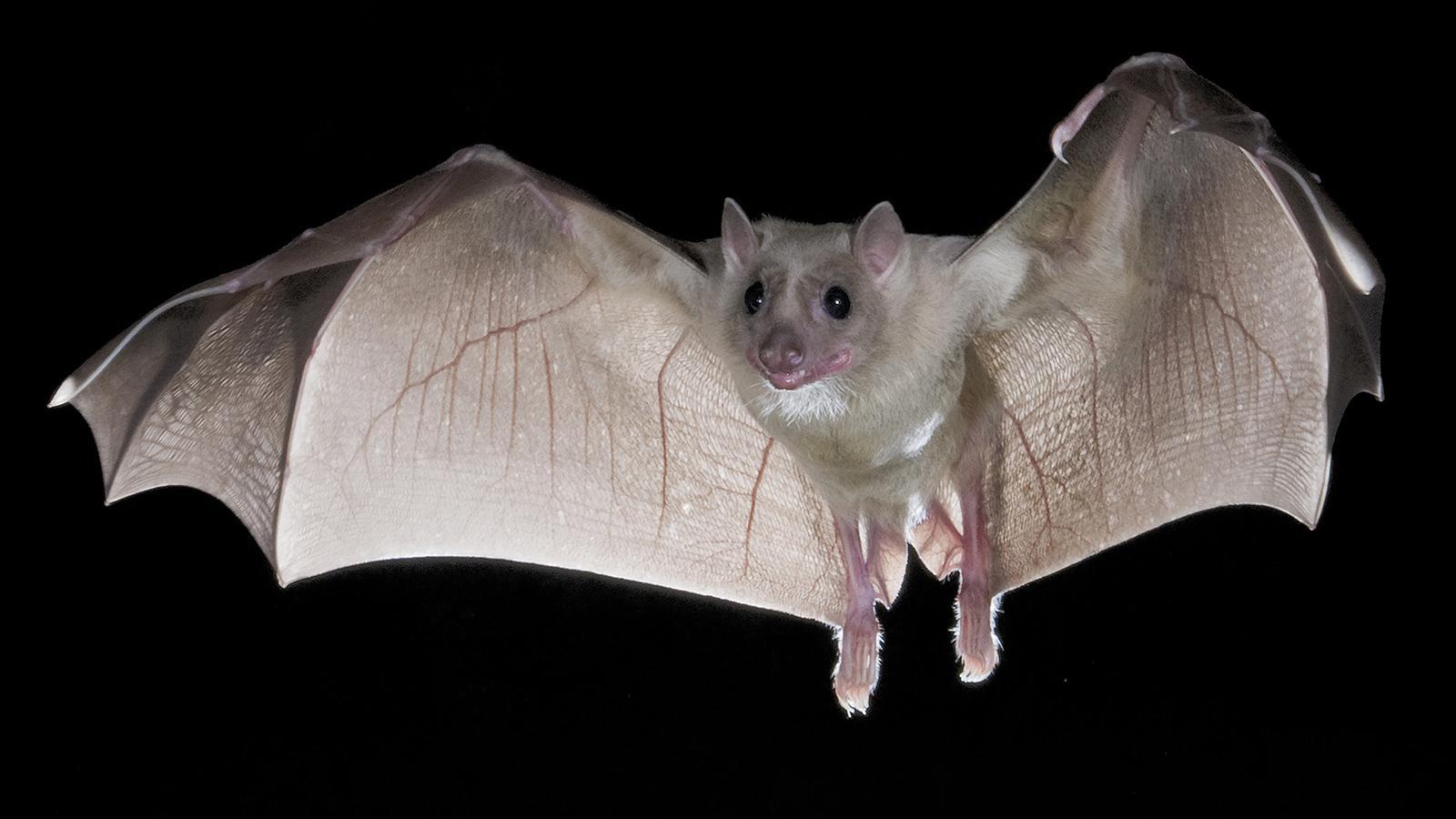 Ученые нашли сходство в микрофлоре птиц и летучих мышей