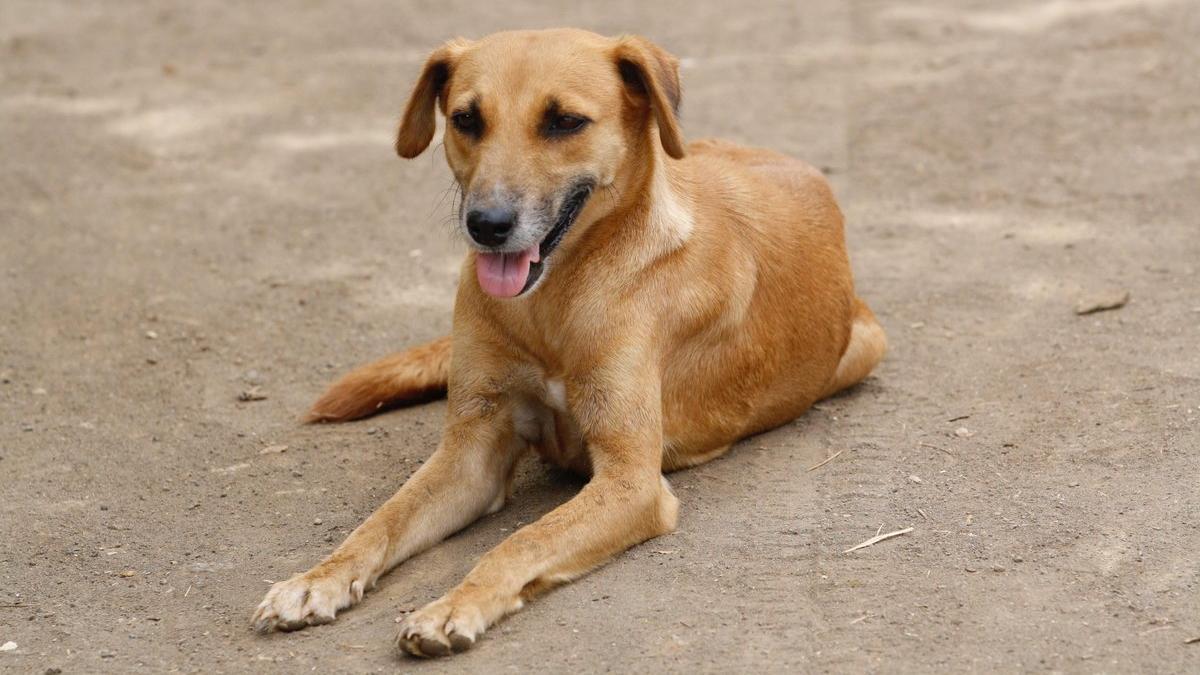 Дикие собаки могут понимать человеческую жестикуляцию
