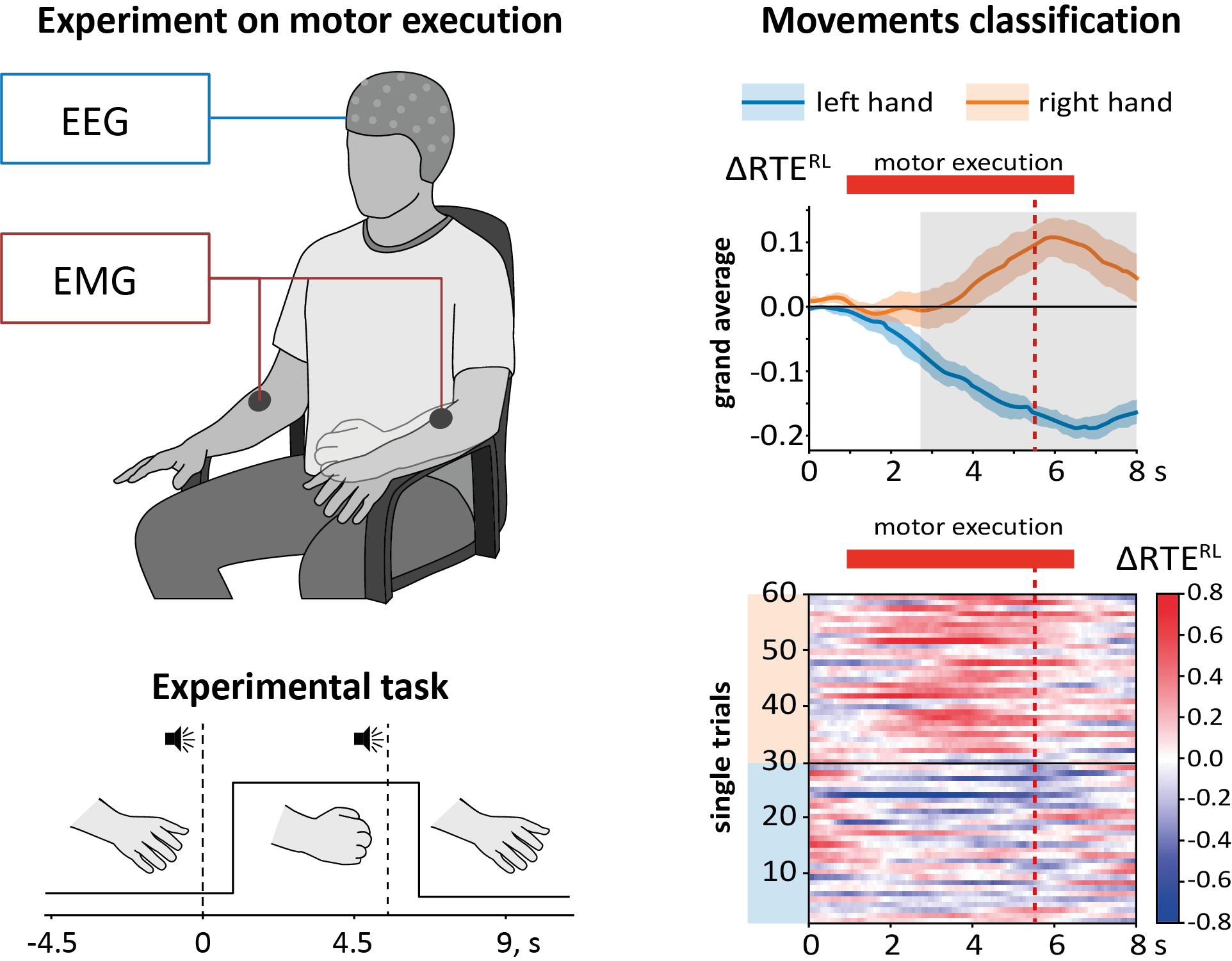 По ЭЭГ смогли понять, когда человек начинает двигаться и различить движения рук