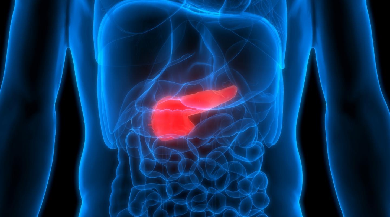 Уязвимая поджелудочная железа