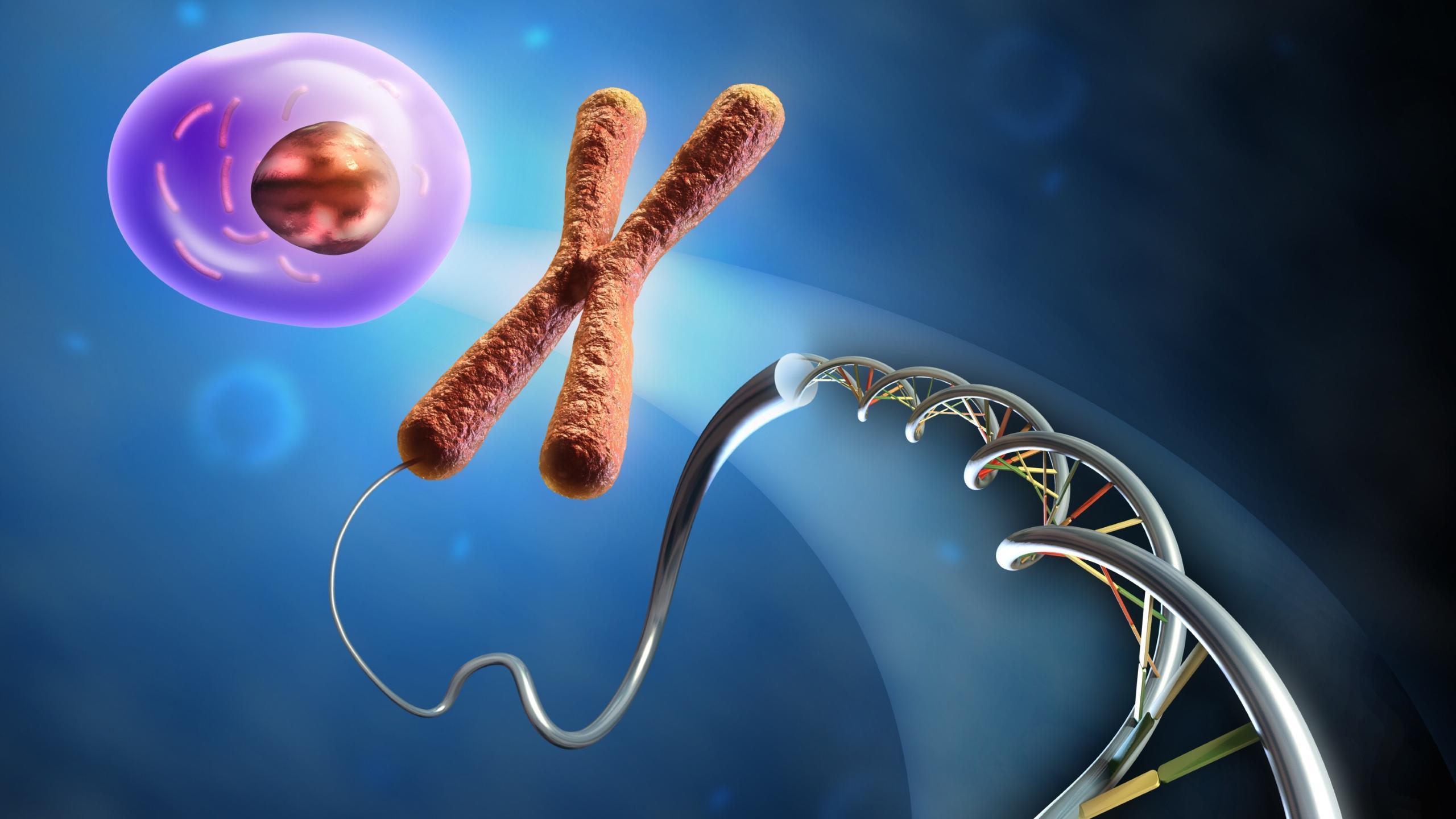 У регуляторных РНК ищут контакты с ДНК