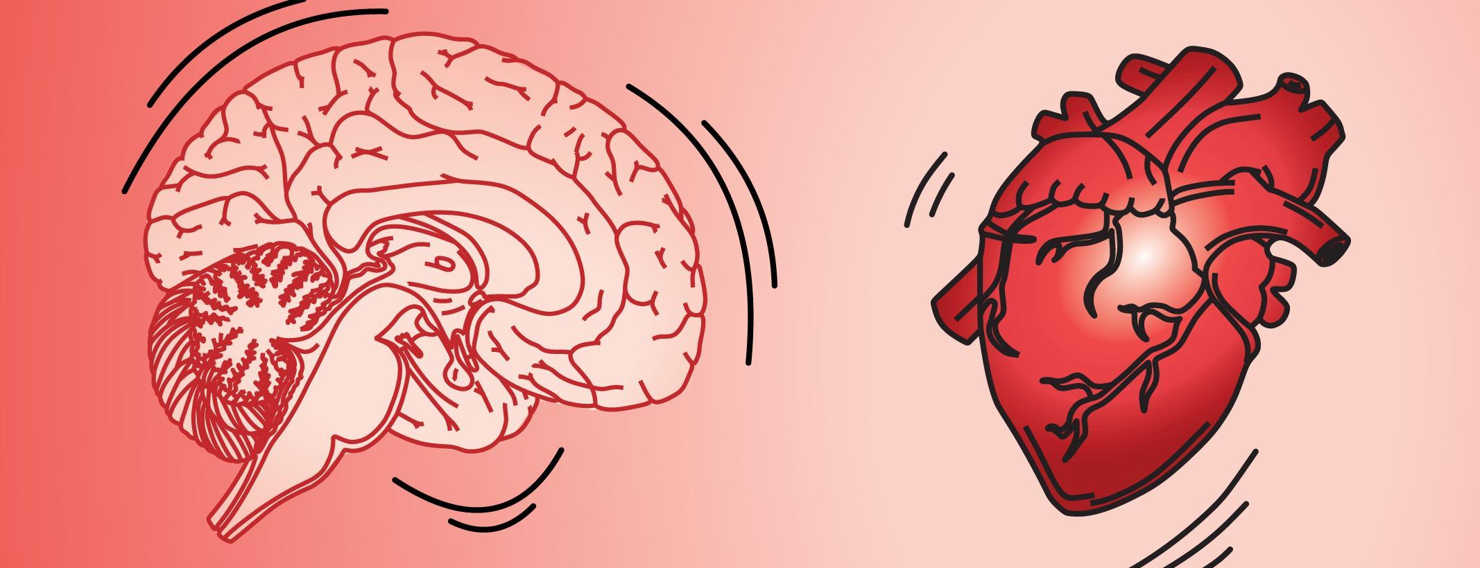 Сердцебиение помогло открыть три типа нейронов в гиппокампе человека