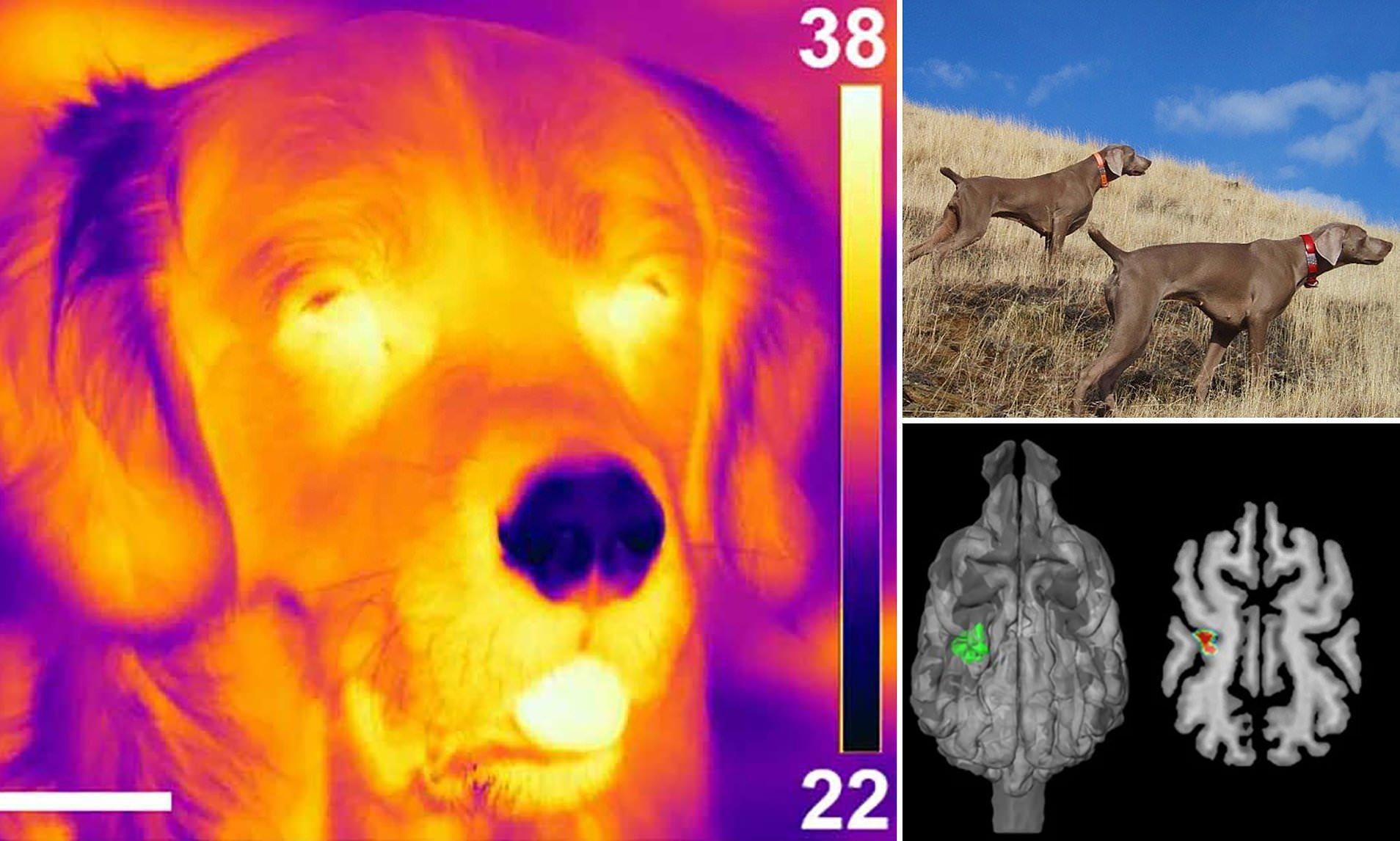 Собачий нос оказался чувствителен к тепловому излучению