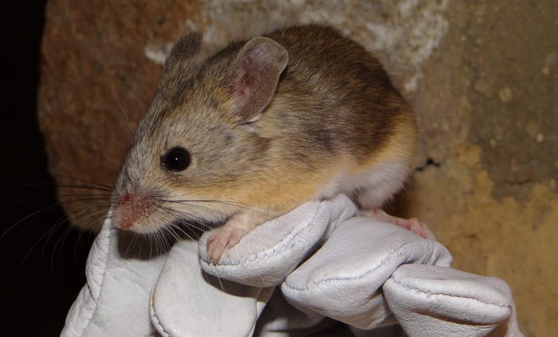 Биологи поймали млекопитающее на рекордной высоте