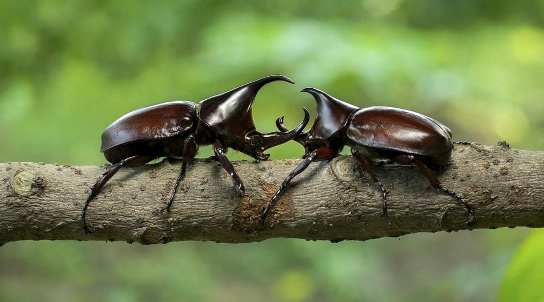 У конкурирующих самцов рождаются дети-мутанты