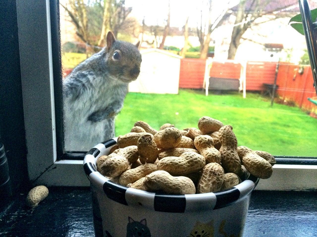 В США одобрили первый пероральный препарат от аллергии на арахис