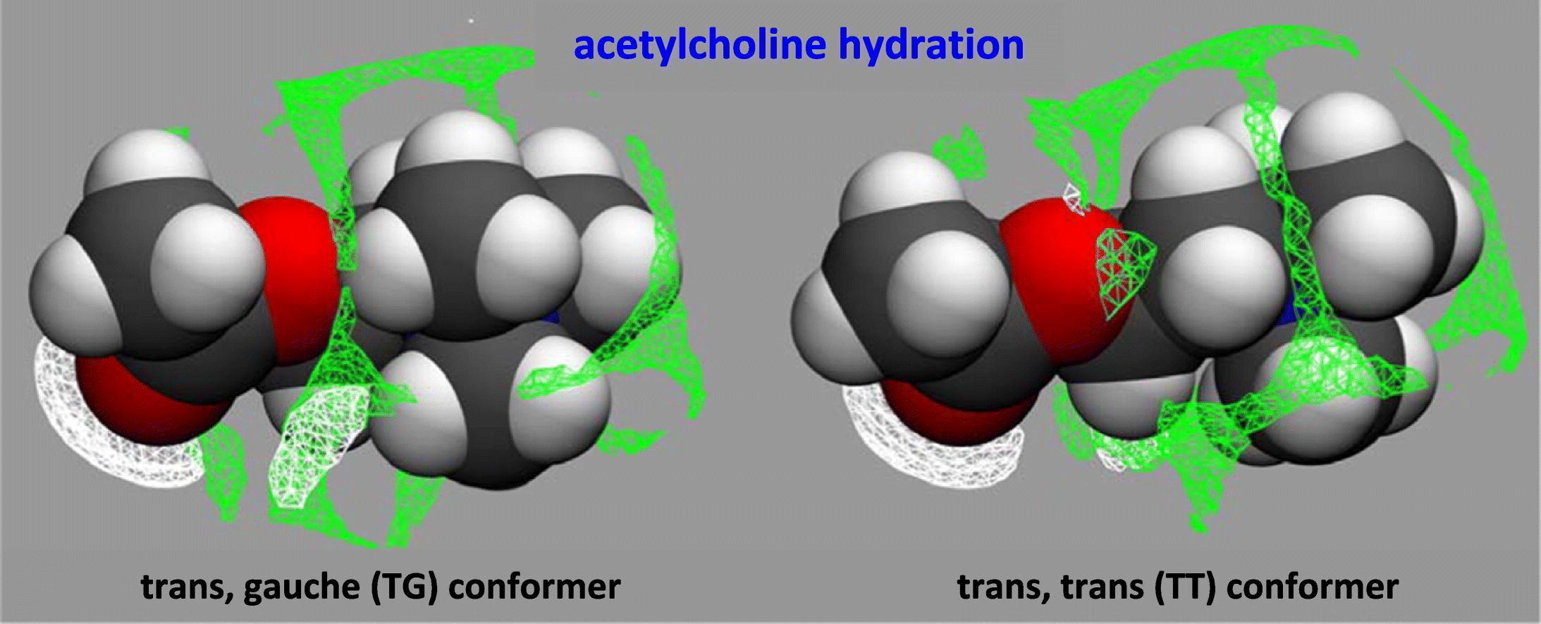 Ацетилхолин «вывели на чистую воду»