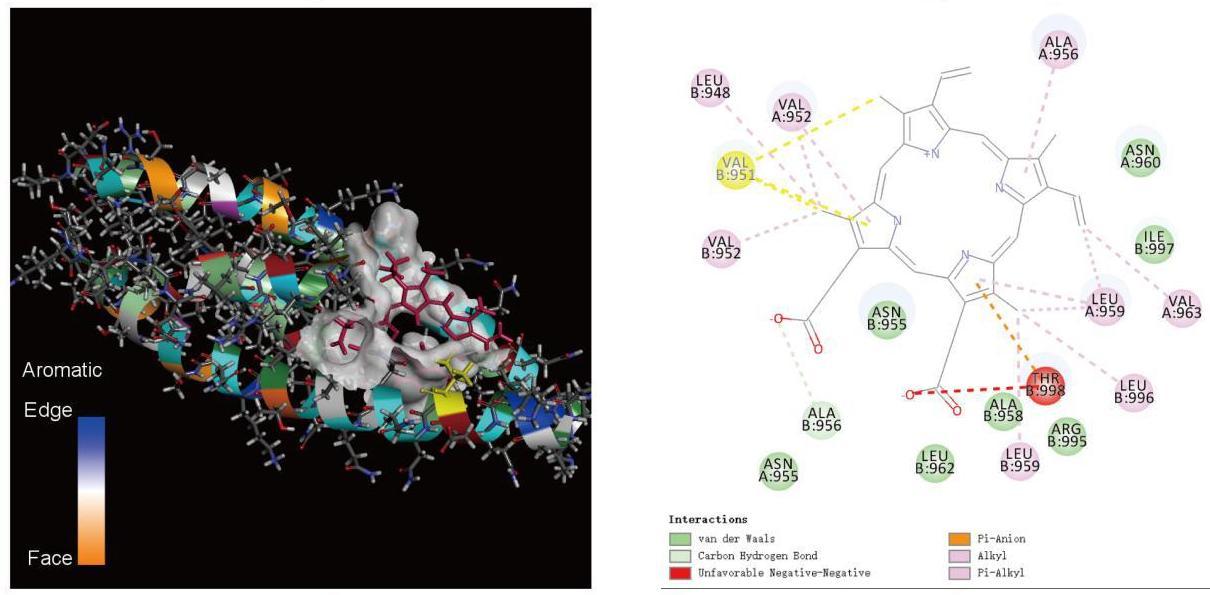 Китайские исследователи объяснили механизм негативного действия SARS-CoV-2 и связанную с ним эффективность двух препаратов