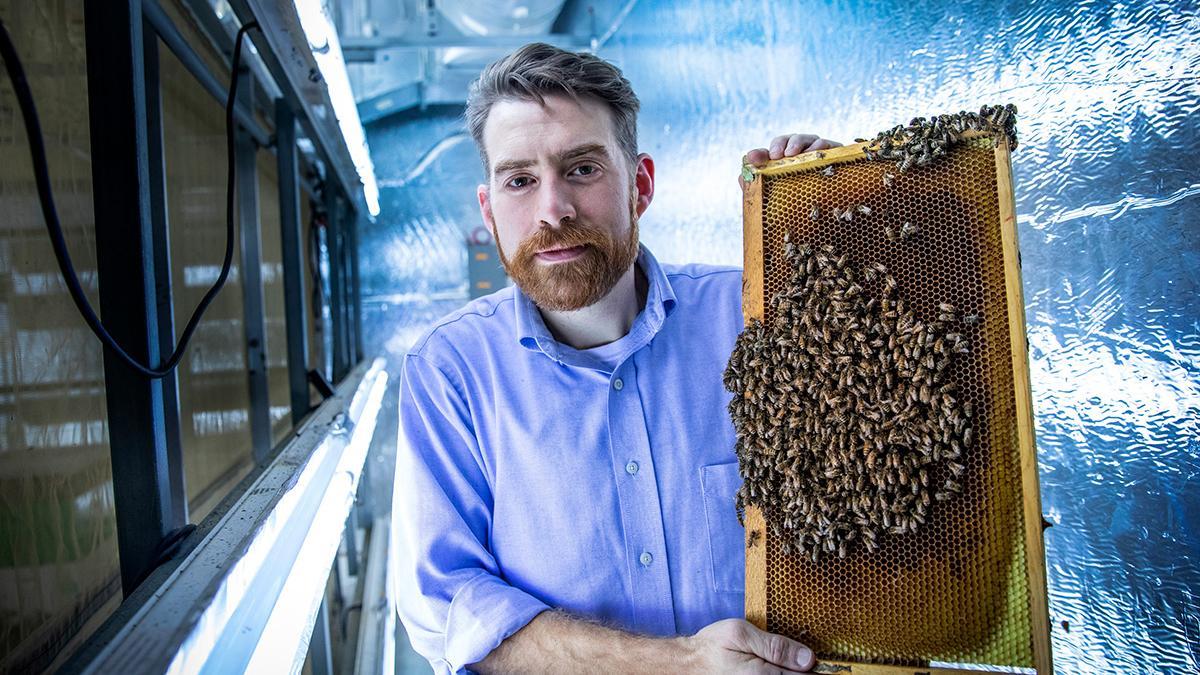 Вирусная инфекция заставляет пчел практиковать «социальное дистанцирование»