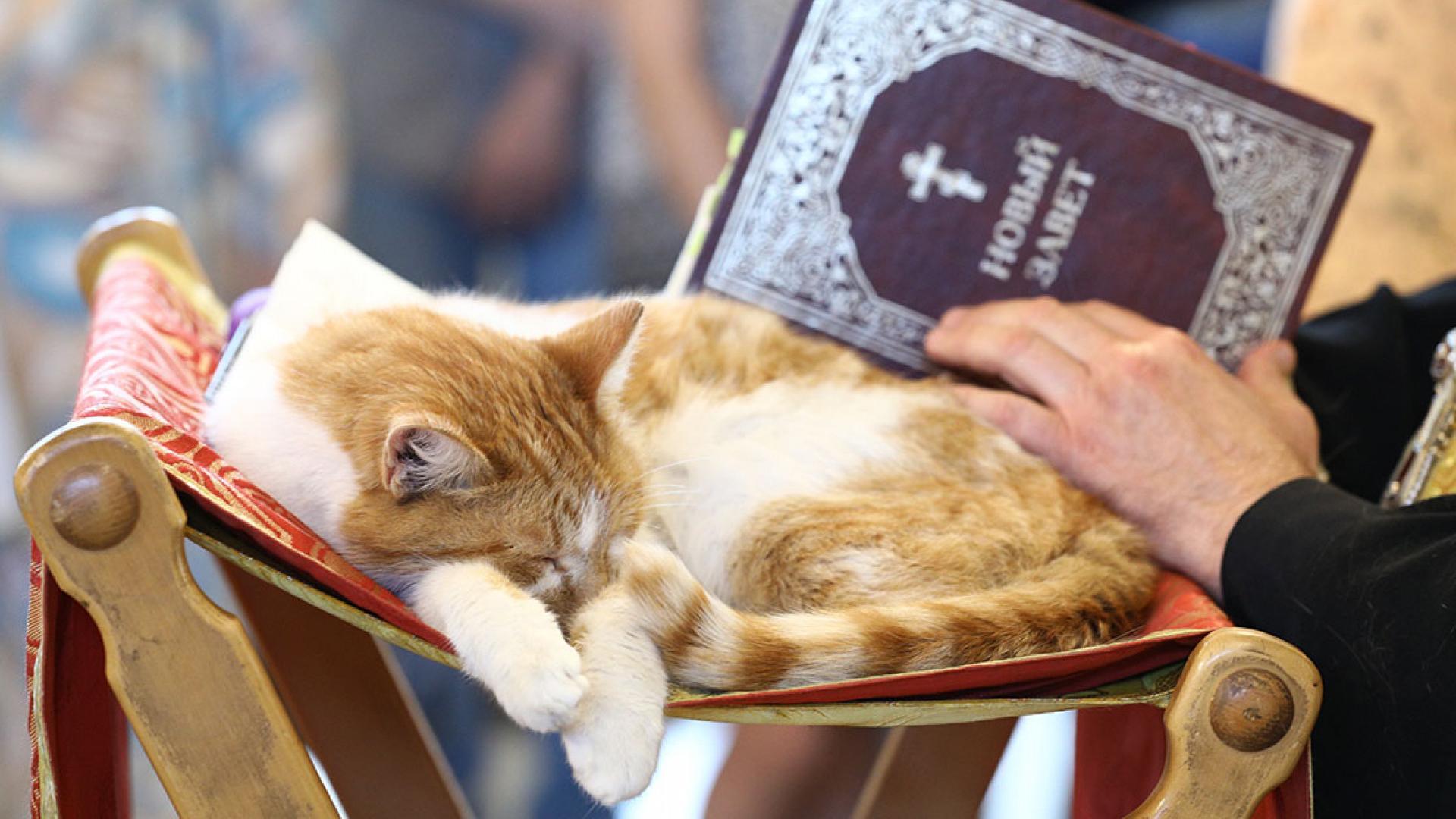 Религиозные люди оказались менее склонны заводить домашних животных — особенно кошек