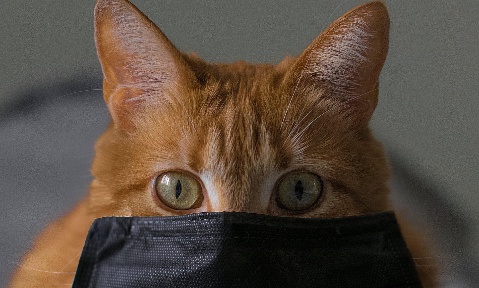 Антитела к вирусу SARS-CoV-2 нашли у уханьских кошек