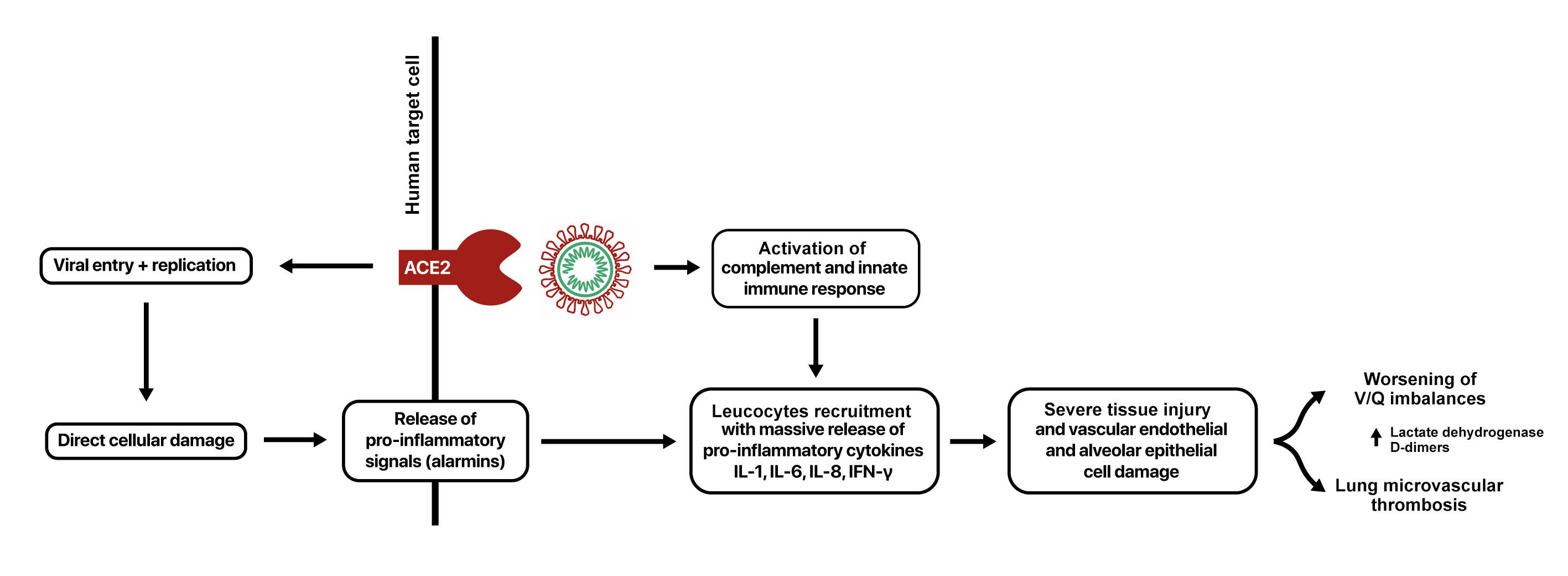 COVID-19, тромбоз и антикоагулянты