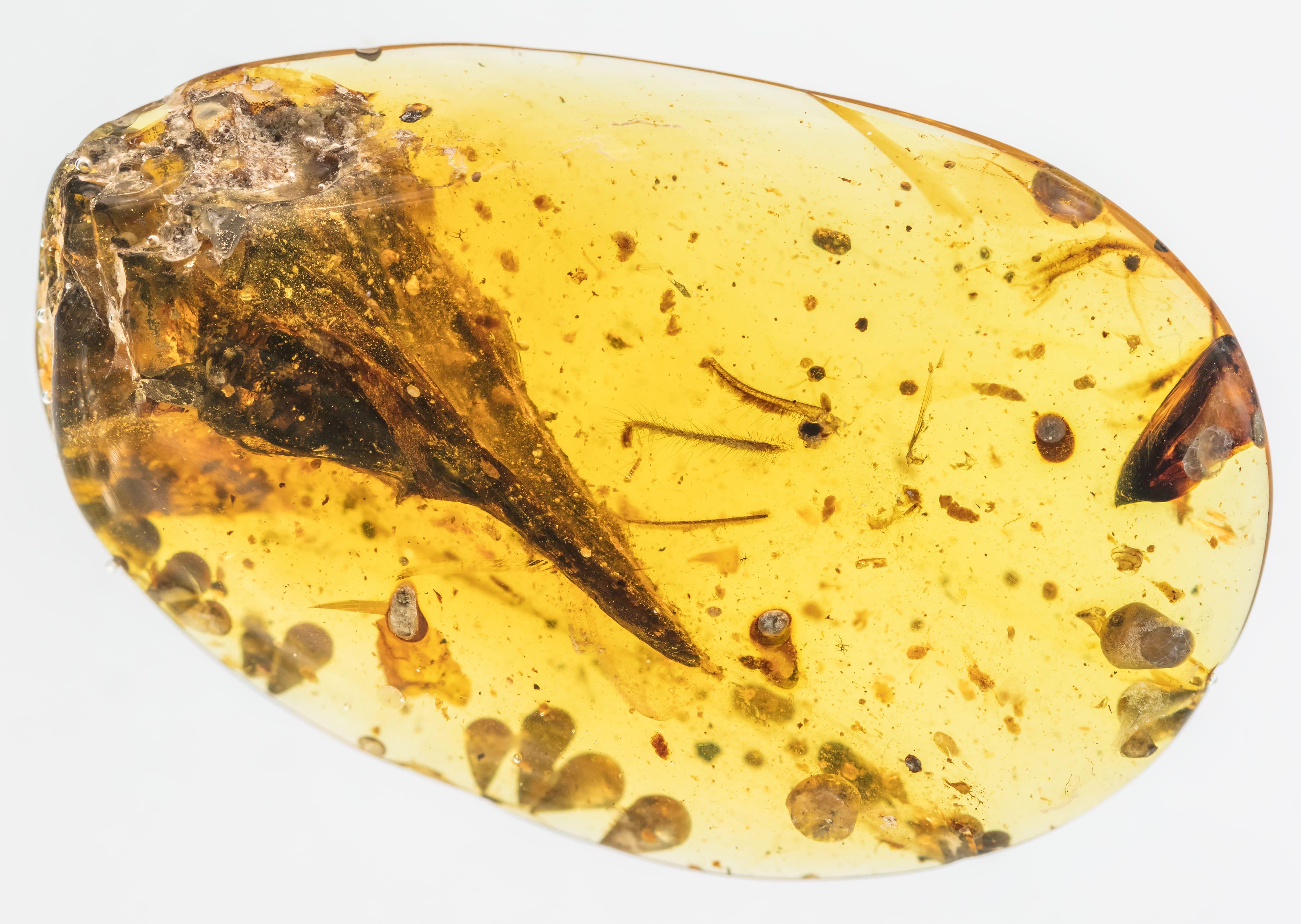 В бирманском янтаре нашли самого маленького динозавра