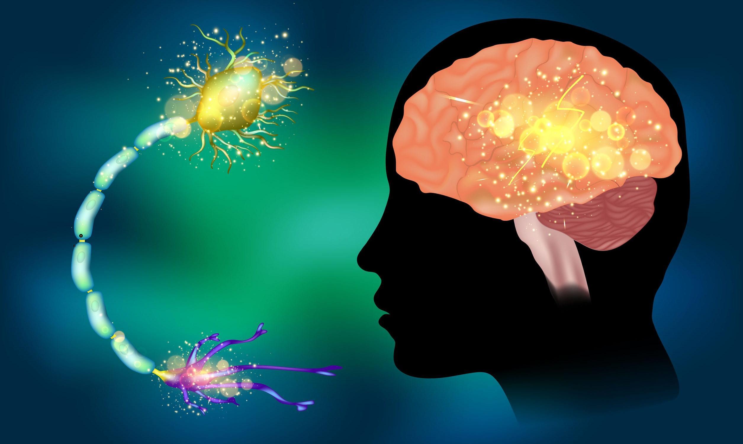 Аутоиммунный механизм эпилепсии