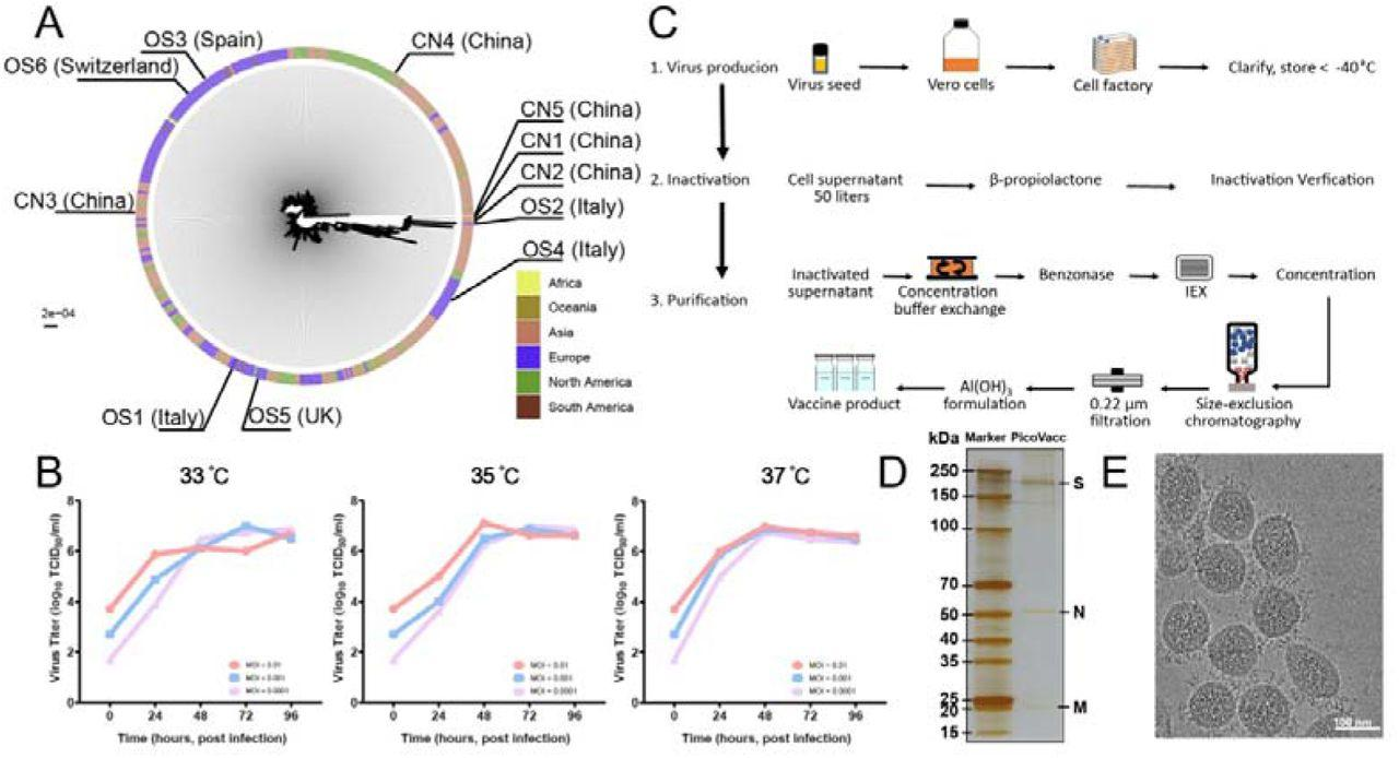 Китайские исследователи заявили об успешных испытаниях противокоронавирусной вакцины на макаках