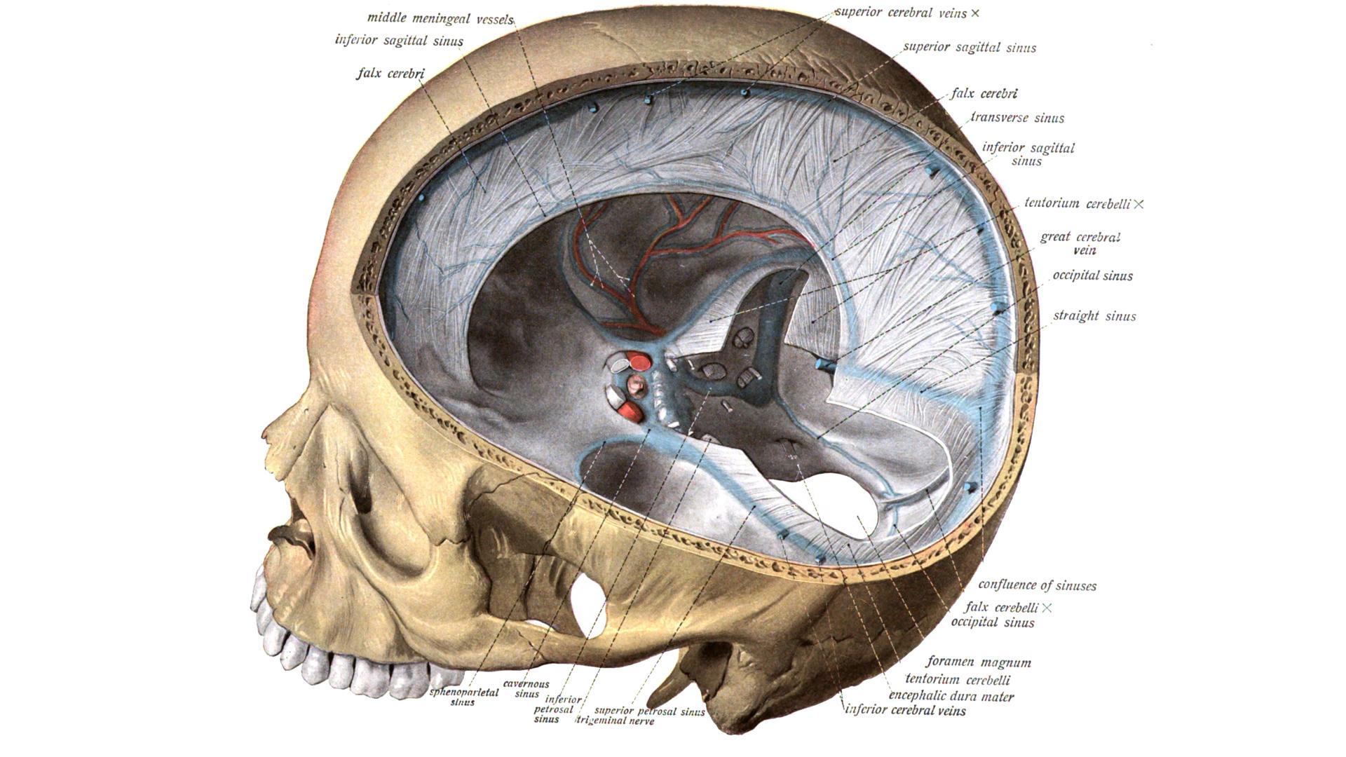 Коронавирус вызвал редкое поражение головного мозга