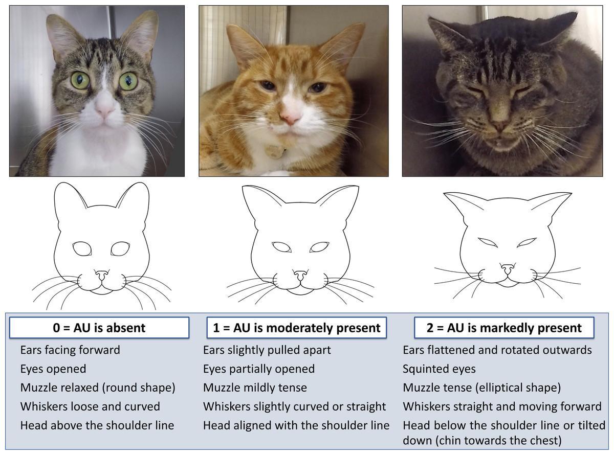 Шкала кошачьих гримас показала эффективность в реальном времени