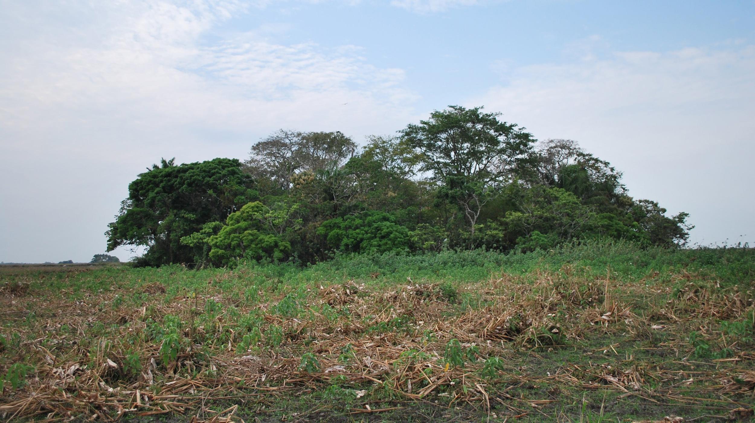 В Амазонии нашли следы развитой «протоцивилизации»