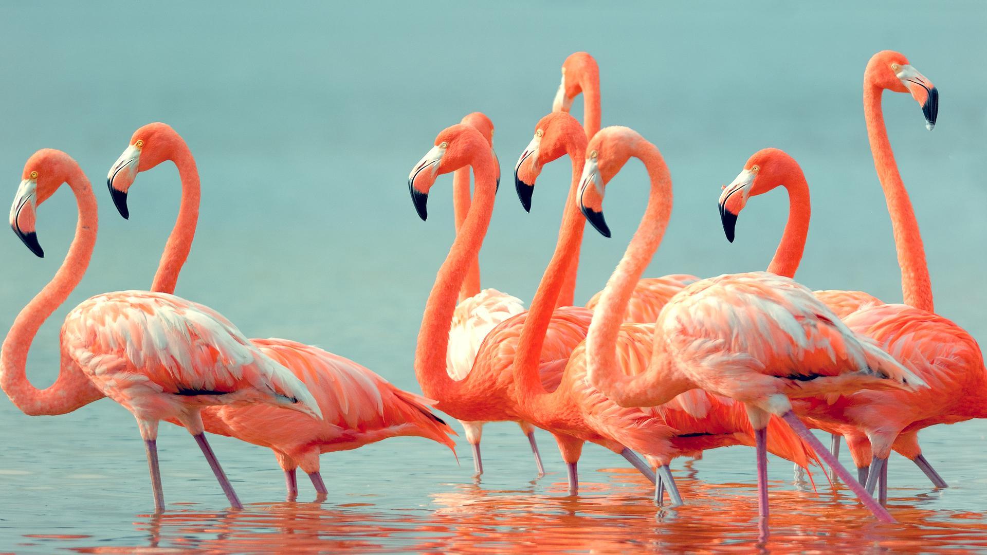 Фламинго дружат годами