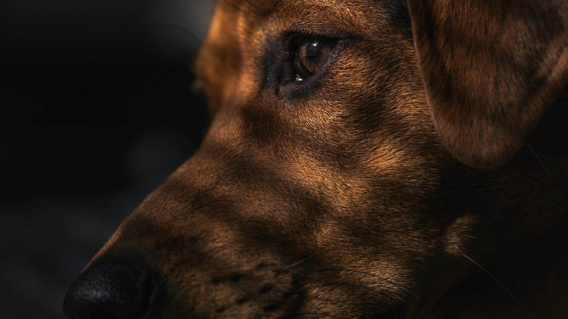Бродячие собаки могли стать источником SARS-CoV-2?