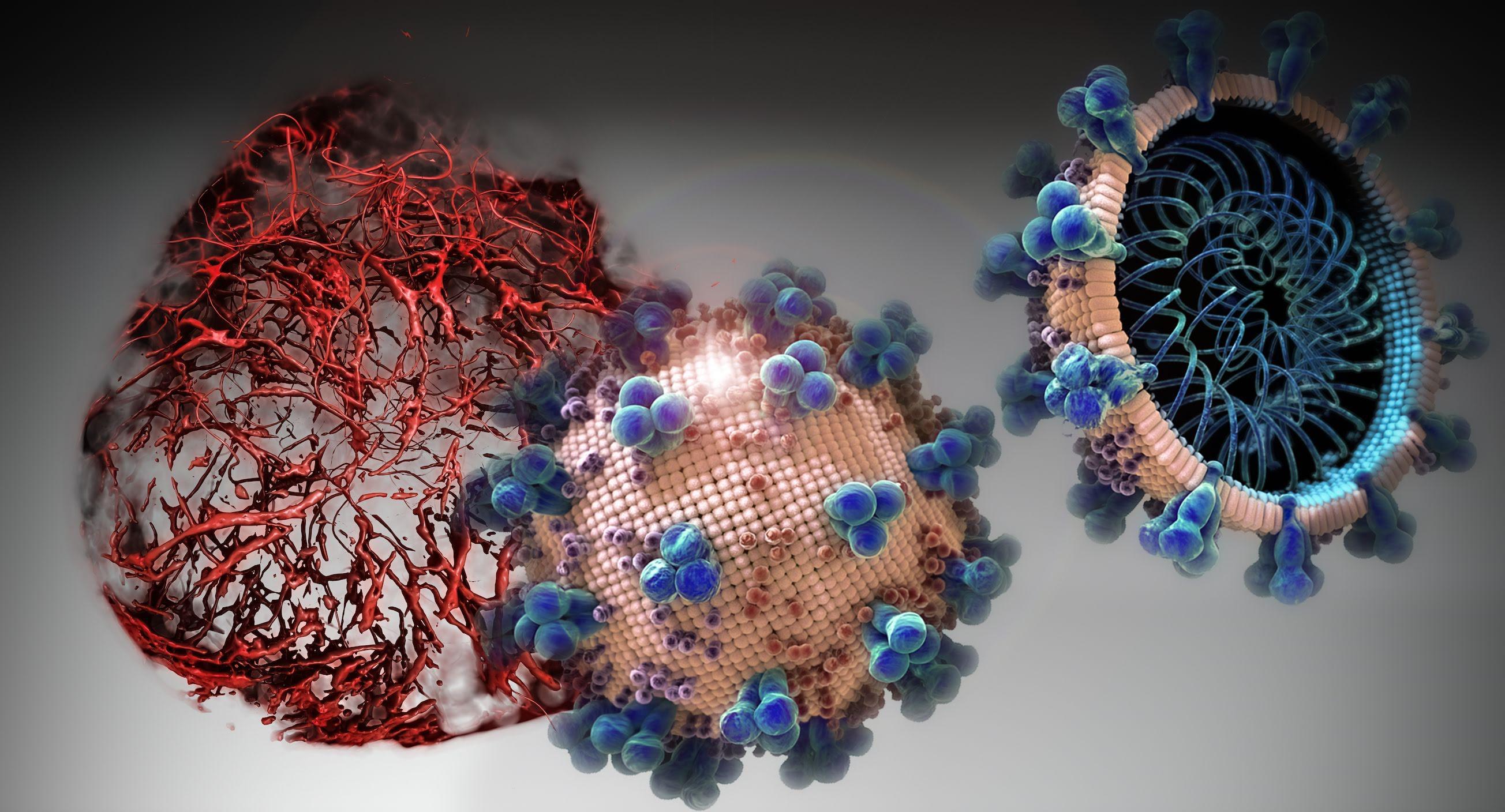 Коронавирус пытаются отвлечь от клеток