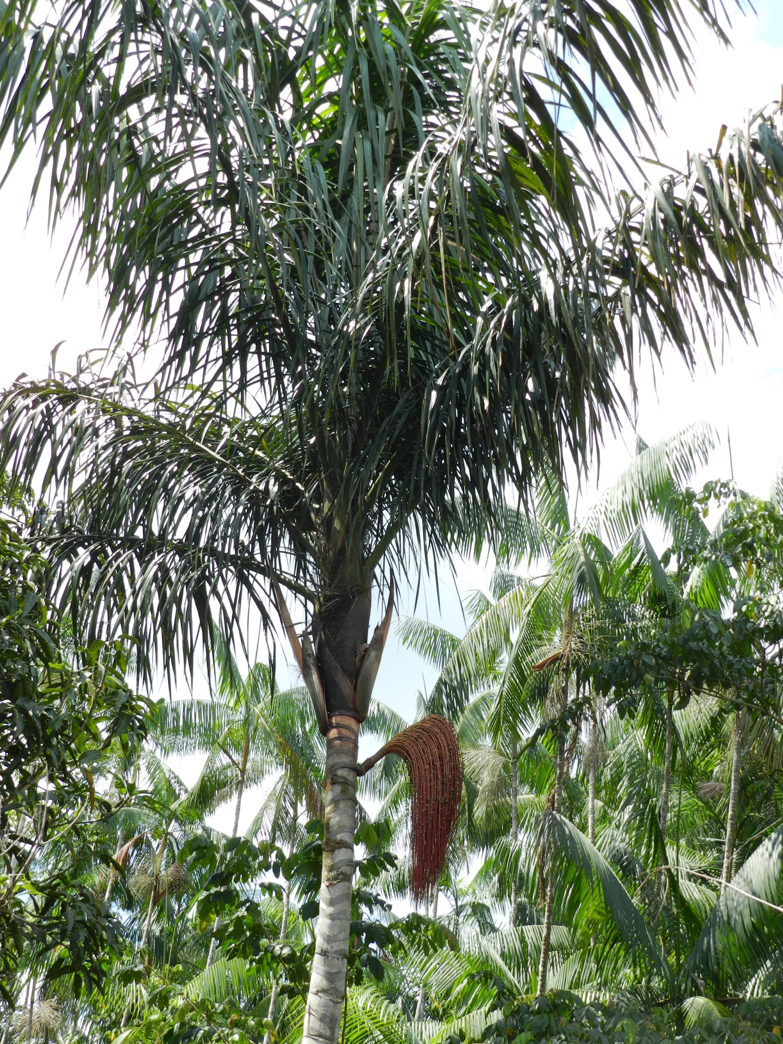 Край лесных плодов