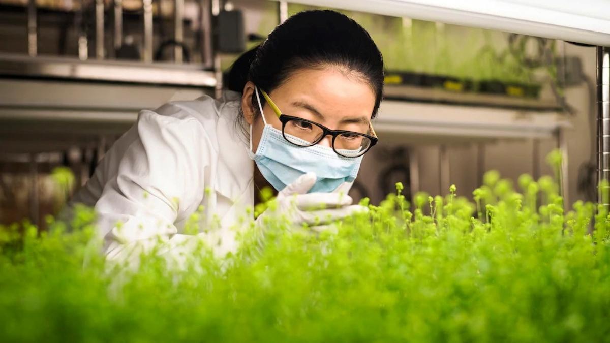 Растения против вирусов