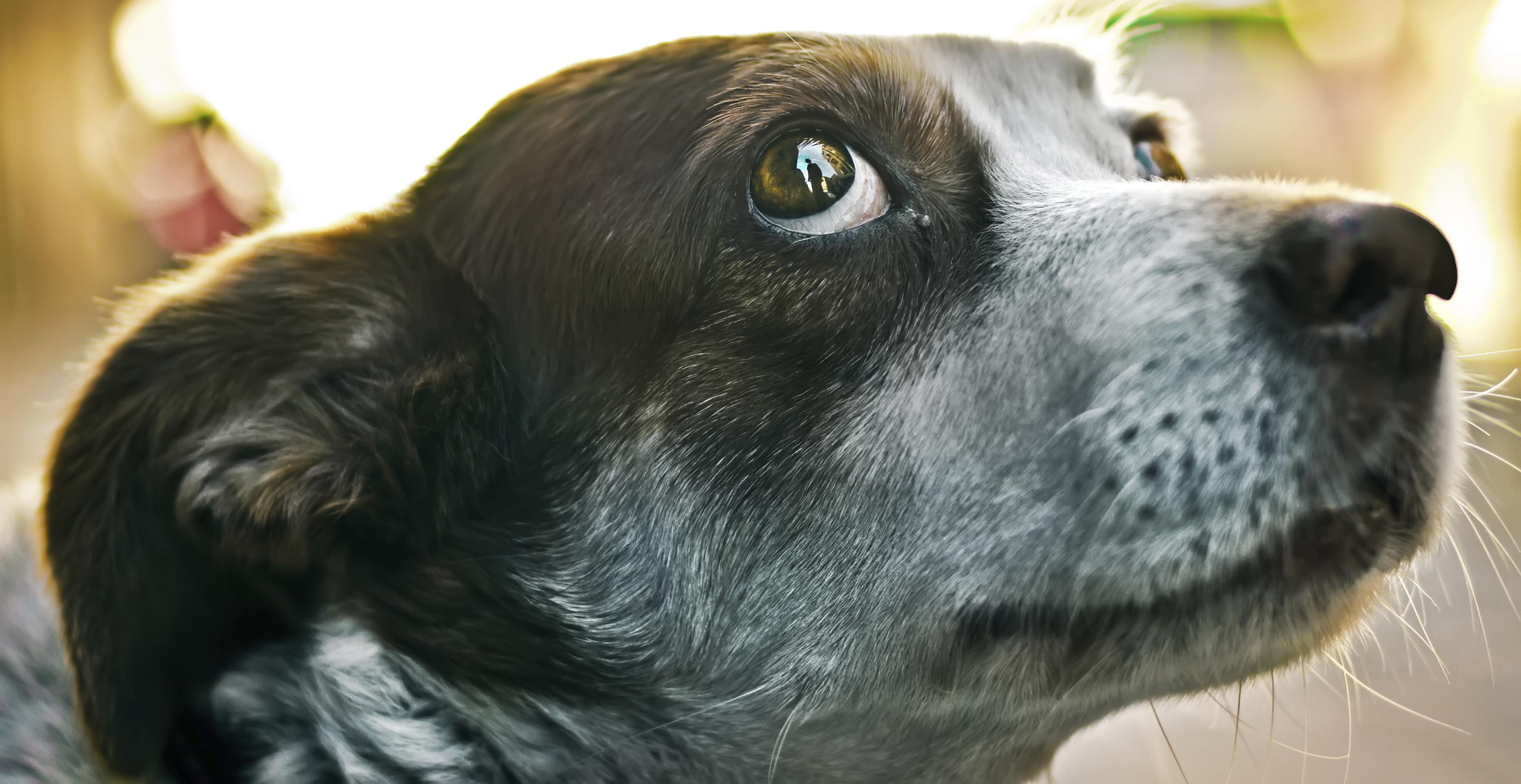Городские собаки пугливее сельских