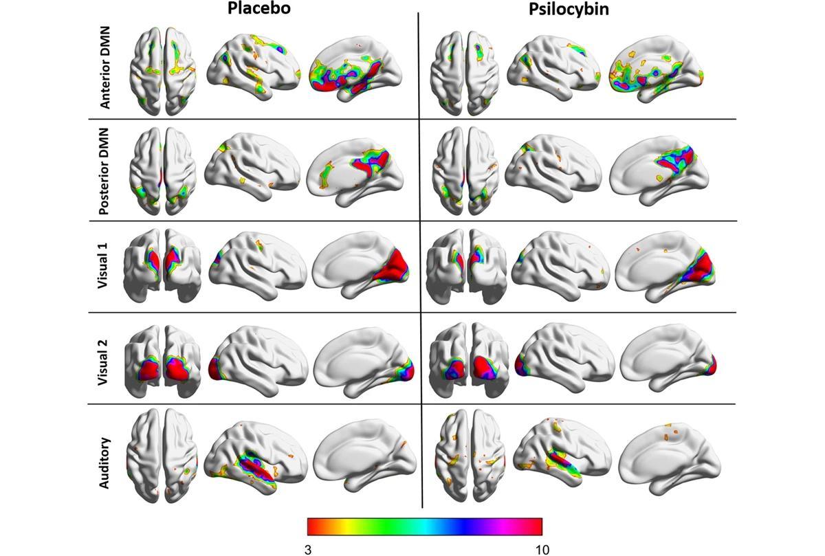 Псилоцибиновое растворение эго объяснили перераспределением глутамата в мозге