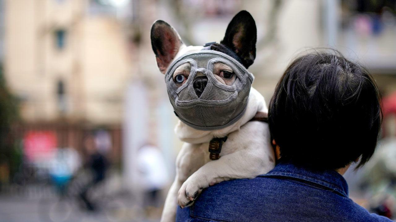 COVID-19 у собак: первые научные данные