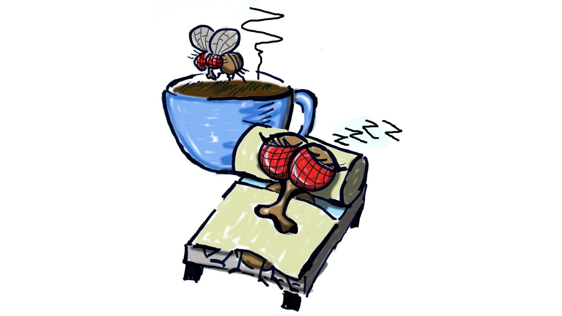 Сон готовит мозг к неожиданным ситуациям