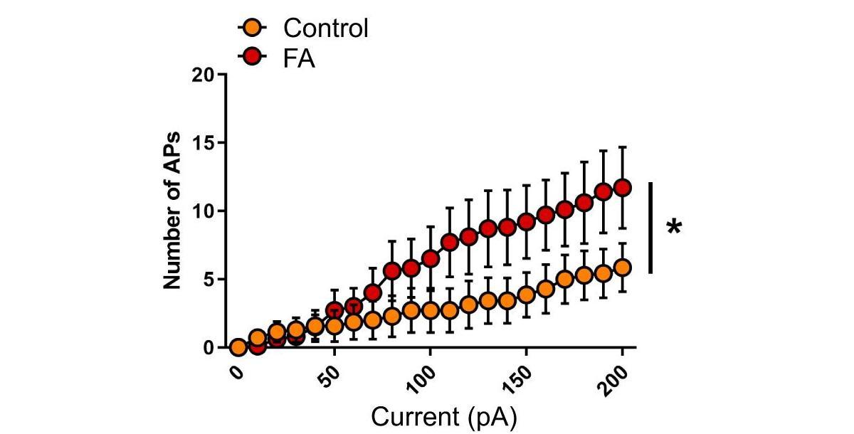 Нейроны самок мышей среагировали на отказ от алкоголя сильнее самцов