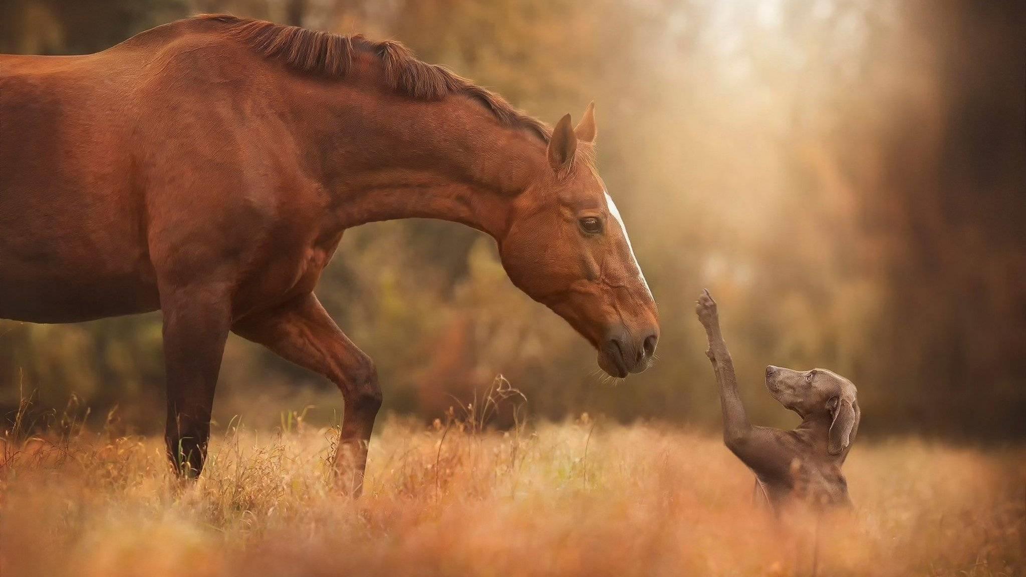 Собаки и лошади научились понимать друг друга