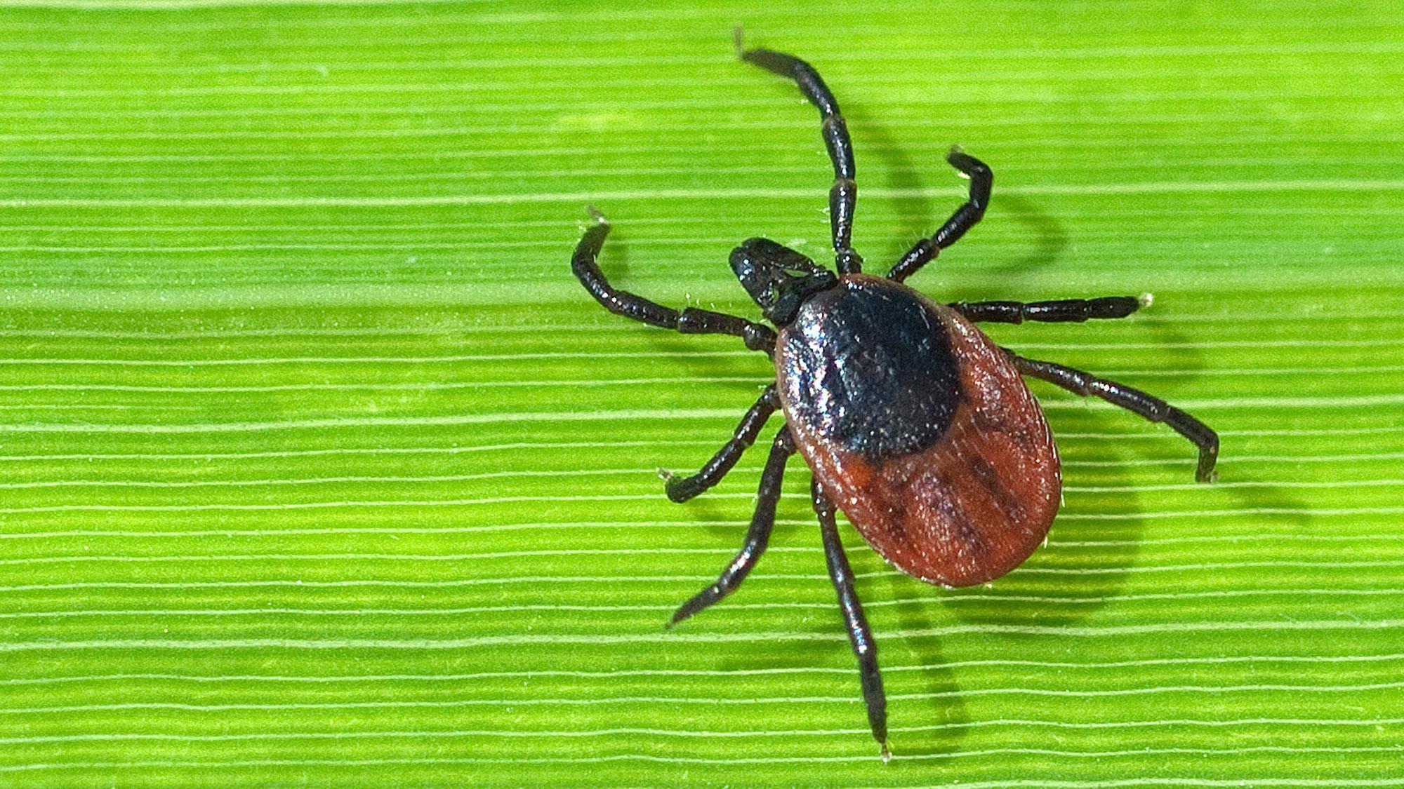 От коронавируса к клещам: выезд на природу не гарантирует безопасность