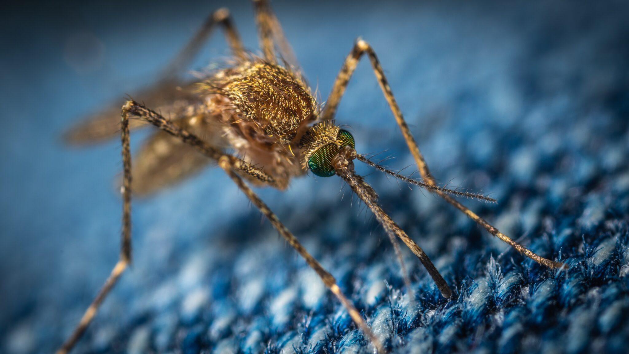 Ученые заразят комаров микробами, чтобы защититься от малярии
